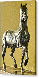 Florence Italy - Anatomical Horse Statue - Medici Palace Acrylic Print