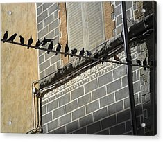 Acrylic Print featuring the photograph Florentine Pigeons by Laurel Best