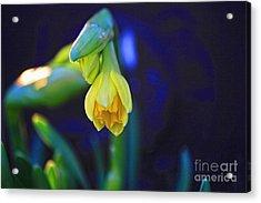 Florescence Acrylic Print by Miso Jovicic