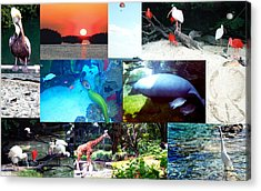Florida Collage 001 Acrylic Print by Maureen E Ritter