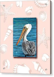 Florida Pelican With Seashell Border Acrylic Print by Peggy Dreher