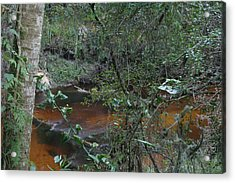 Florida Tea Acrylic Print by Sean Green