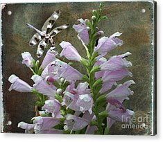 Flower And Dragonfly Acrylic Print by Jim Wright