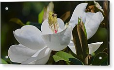 Acrylic Print featuring the photograph Flower And The Bee by Rima Biswas