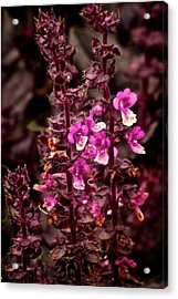 Flower Acrylic Print by Andre Faubert