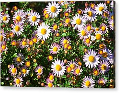 Acrylic Print featuring the photograph Flower Assault by Jim Moore