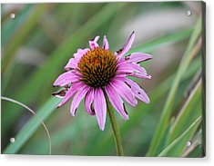 Acrylic Print featuring the photograph Flower At Waterfall Glen Forest Preserve by Peter Ciro