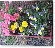 Flower Basket 2 Acrylic Print by Amy Bradley