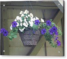Flower Basket 3 Acrylic Print by Amy Bradley