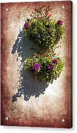 Flower Baskets Acrylic Print by Svetlana Sewell