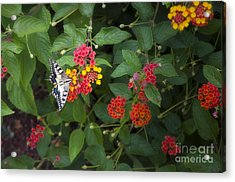 Flower By Flower Acrylic Print by Roberto Bettacchi