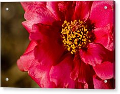 Flower Carpet Rose Acrylic Print by Rob Hemphill