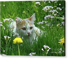 Flower Cat Acrylic Print by Bruno Santoro
