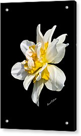 Acrylic Print featuring the photograph Flower by David Lester