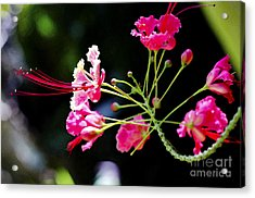 Flower Digital Painting Acrylic Print by Pravine Chester