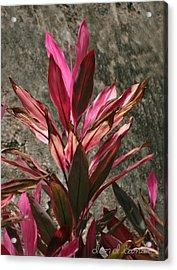 Flower Acrylic Print by Don Lanier