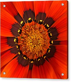 Flower Eye Acrylic Print