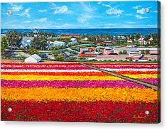 Flower Fields Acrylic Print by Lisa Reinhardt