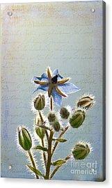 Flower Fuzz Acrylic Print