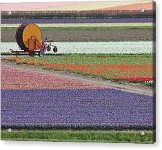 Flower Garden Acrylic Print by Tia Anderson-Esguerra
