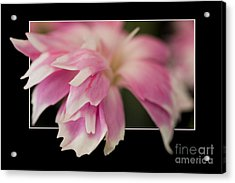 Flower In Frame -2 Acrylic Print
