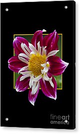 Flower In Frame -5 Acrylic Print