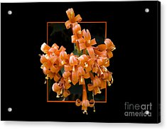Flower In Frame -6 Acrylic Print