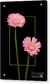 Flower In Frame -7 Acrylic Print