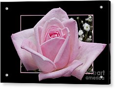 Flower In Frame -9 Acrylic Print