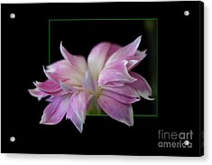 Flower In Frame Acrylic Print