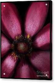 Flower In Pink Acrylic Print