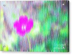Flower In The Rain Acrylic Print by Silvia Ganora