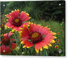 Acrylic Print featuring the photograph Flower by John Crothers