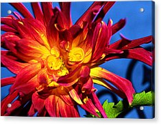 Acrylic Print featuring the photograph Flower by Kelly Reber