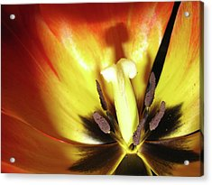 Flower Life Acrylic Print by Mike Stouffer