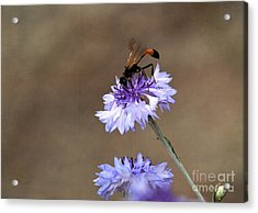 Acrylic Print featuring the photograph Flower Meal by Tamera James