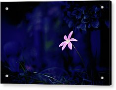 Flower Acrylic Print by Moaan