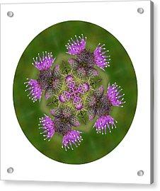 Acrylic Print featuring the photograph Flower Of Scotland by Lynn Bolt