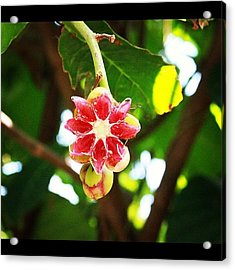 Flower Or Fruit?? Another Wonder Of Acrylic Print