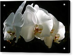 Flower Painting 0004 Acrylic Print by Metro DC Photography