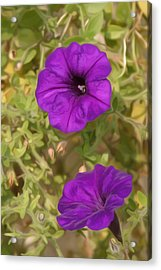 Flower Painting 0006 Acrylic Print by Metro DC Photography