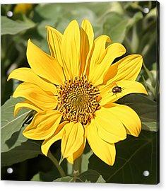 Flower Painting 0010 Acrylic Print
