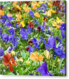 Flower Palette Acrylic Print by Laura George