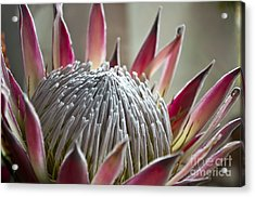 Flower Planet Acrylic Print by Roberto Bettacchi
