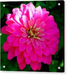 Flower Acrylic Print by Shweta Singh