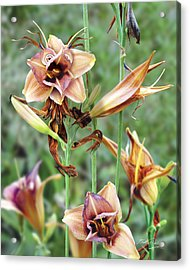 Flower Sprite Acrylic Print by Bill Fleming