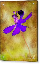 Flower Take Flight Acrylic Print by Judi Bagwell