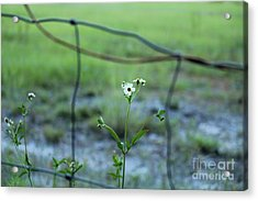 Flower Through The Fence Line Acrylic Print by Theresa Willingham