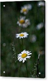 Flower Trail Acrylic Print by Stephen Thomason