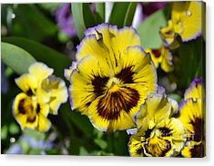 Flower With Pruple Trim Acrylic Print by Artie Wallace